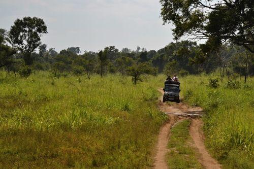 sri lanka safari jeep