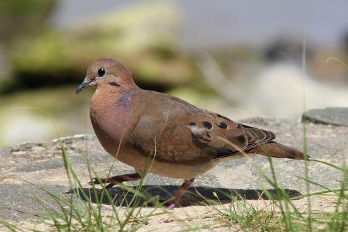 st lucia bird wildlife