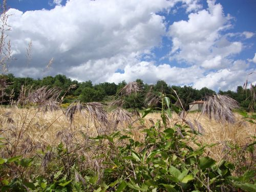 st ostian ardèche grass