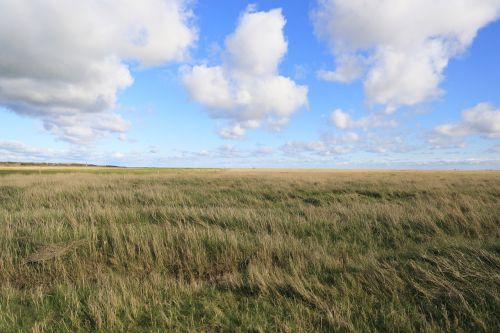 st-peter-ording salt meadow north sea