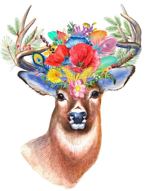 stag wildflower floral