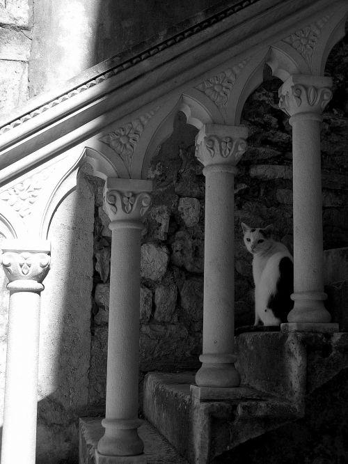 laiptinė,katė,šešėlis,architektūra,akmens tvora