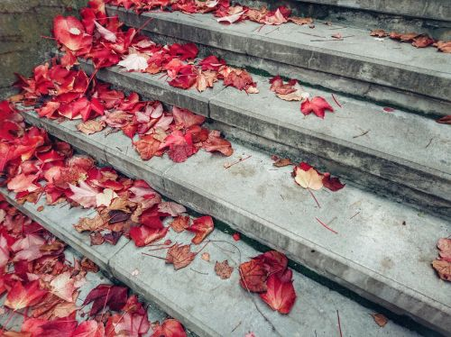 stairs autumn leaves