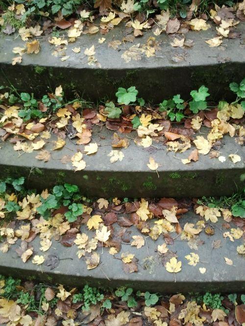 stairs gradually autumn