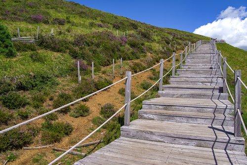 stairs  wood  path