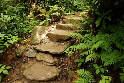 stairs  trail  forest