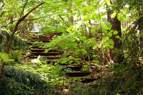 Stairway In Woods