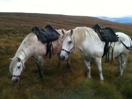 stalking highland ponies deer hunting