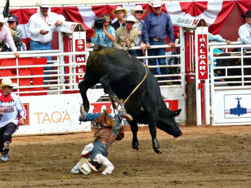 stampede calgary bull riding