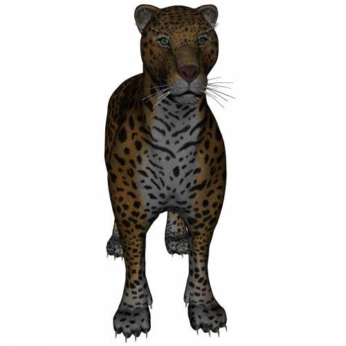 Standing Panthera