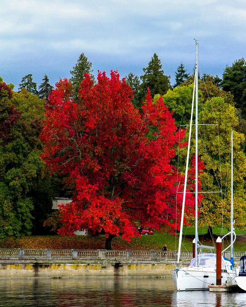 stanley park  fall  autumn