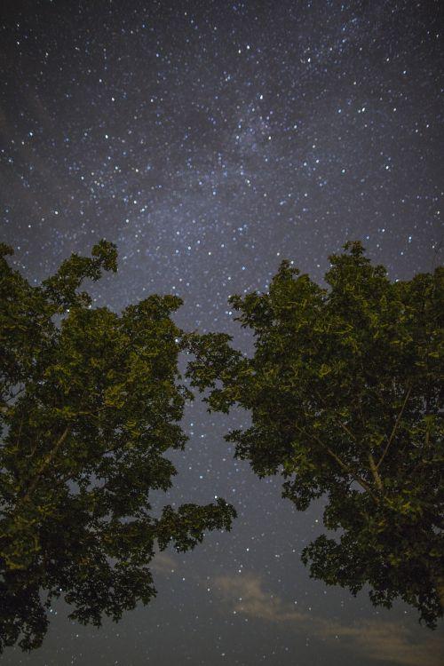 žvaigždė,dangus,Žvaigždėtas dangus,naktinis dangus,vakaras,paukščių takas,naktis