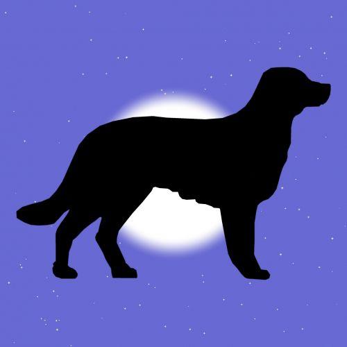 Star Dust Dog