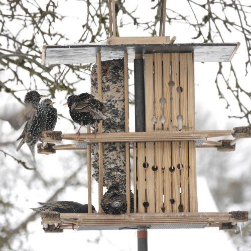 stare feeding aviary
