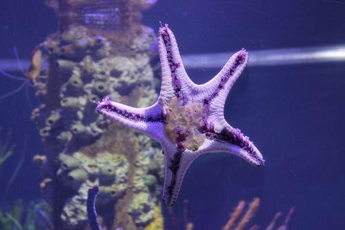 starfish aquarium starfish-tank