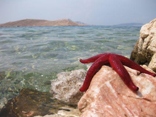 starfish sea beach