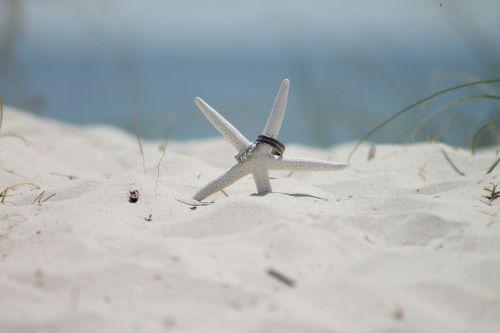 starfish sand beach