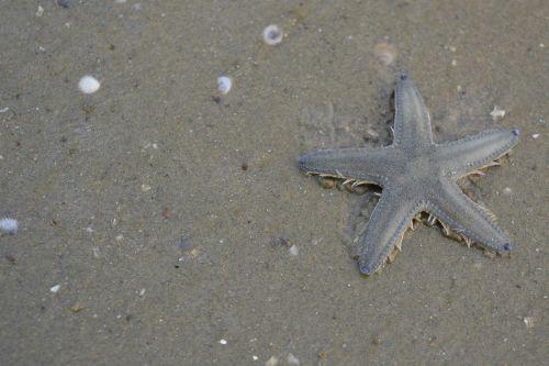 starfish beach nature
