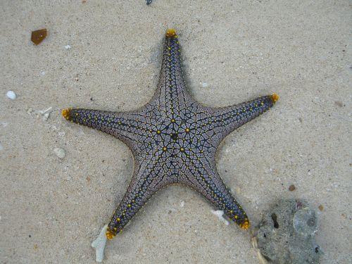 starfish marine life public record
