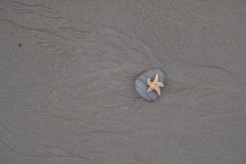 starfish beach stone