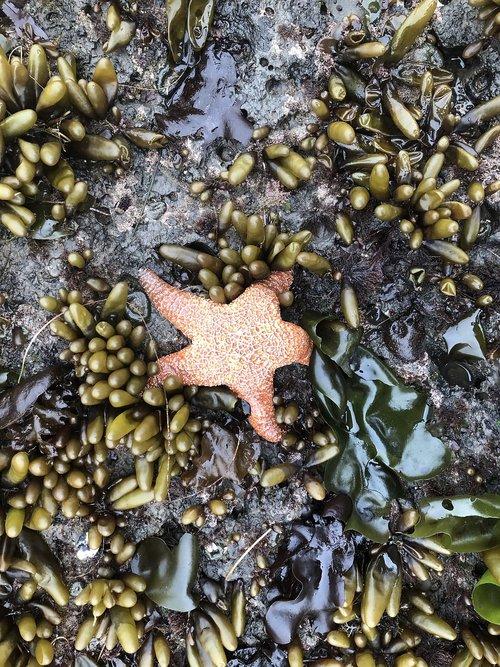 starfish  star  fish