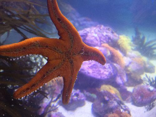 starfish aquarium sea