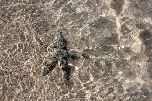 Starfish In The Beach