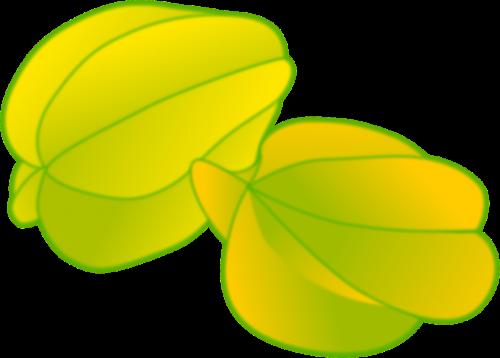 starfruit fruit yellow