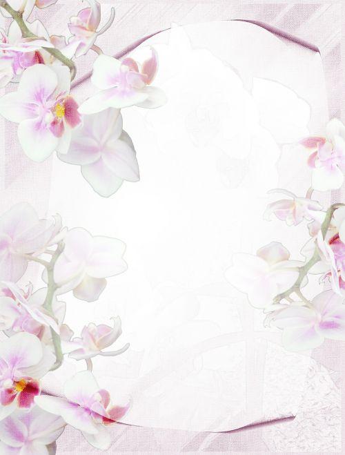 Raštinės reikmenys,orchidėja,violetinė,fonas,švelnus,gėlių,žiedas,žydėti,gėlė,violetinė,rožinis
