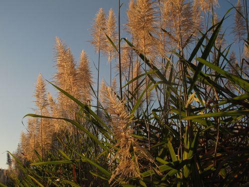 stem cane peaceful