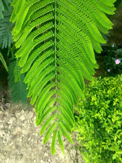 stem leaves green