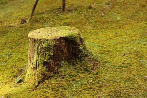 stem wood natural