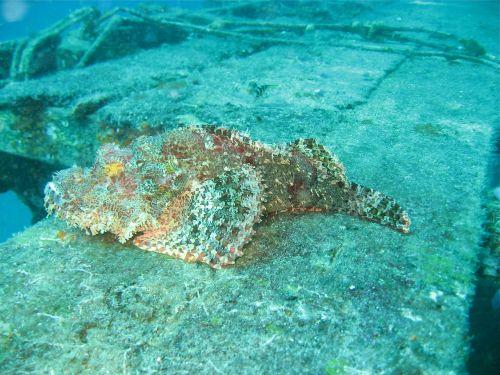 stenfisk borneo dive