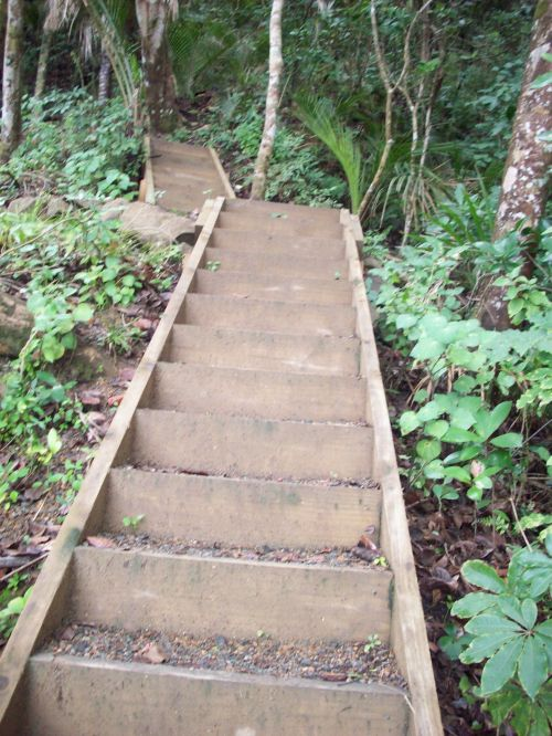 Step Stairs In Bush