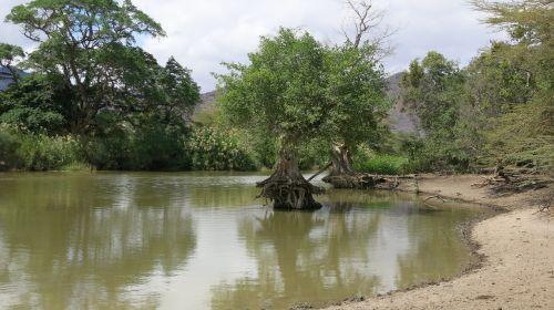 steppe tanzania lake