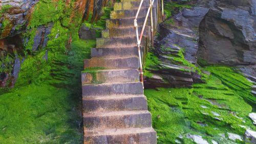 Steps Over Seaweed