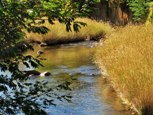 srautas, upė, vandens, žolė, laukas, medžiai, sterkspruit upė, Drakensberg