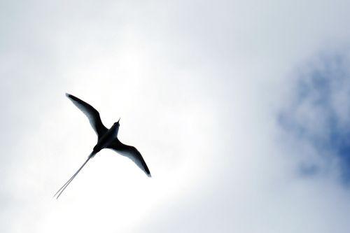 stern freebird span