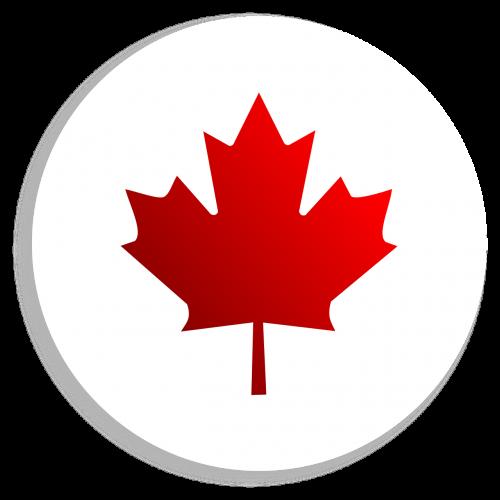 sticker maple leaf transparent background