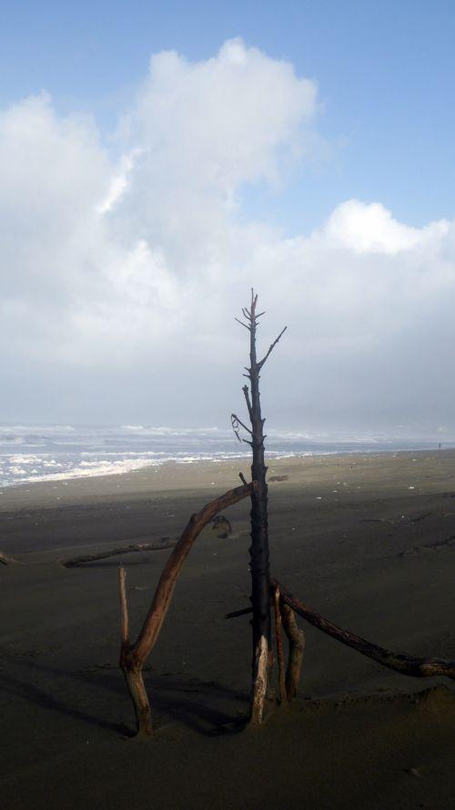 Sticks In Sand