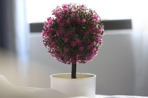 vis dar,gėlė,makro,gėlių