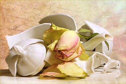still life jug broken withered rose