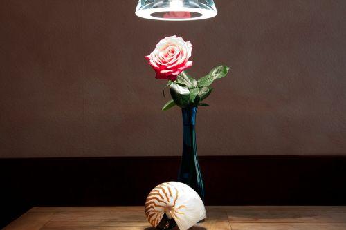 still life vase nautilus