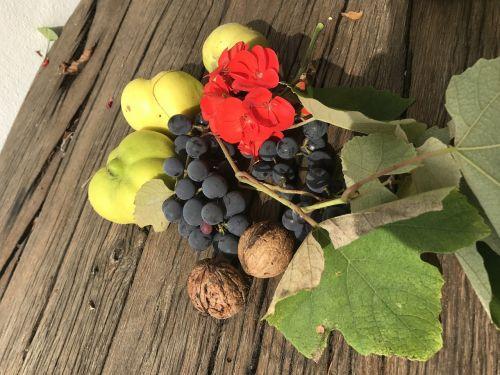 still life fruits harvest