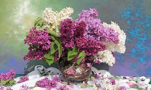still life  bouquet  lilac