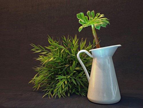 still life  vase  plant