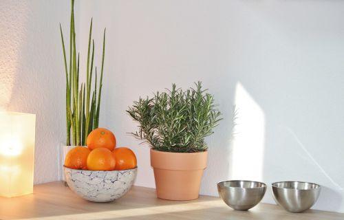 still life decoration culinary herbs