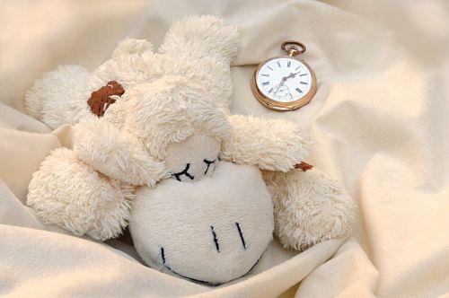 still life teddy bear schäfchen