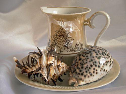 still life seashells tableware