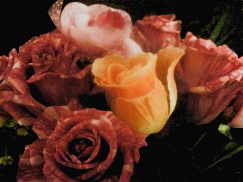 vis dar, gyvenimas, gėlė, žiedai, rožė, Daisy, geltona, raudona, rožinis, vis dar gyvena gėlių žiedai